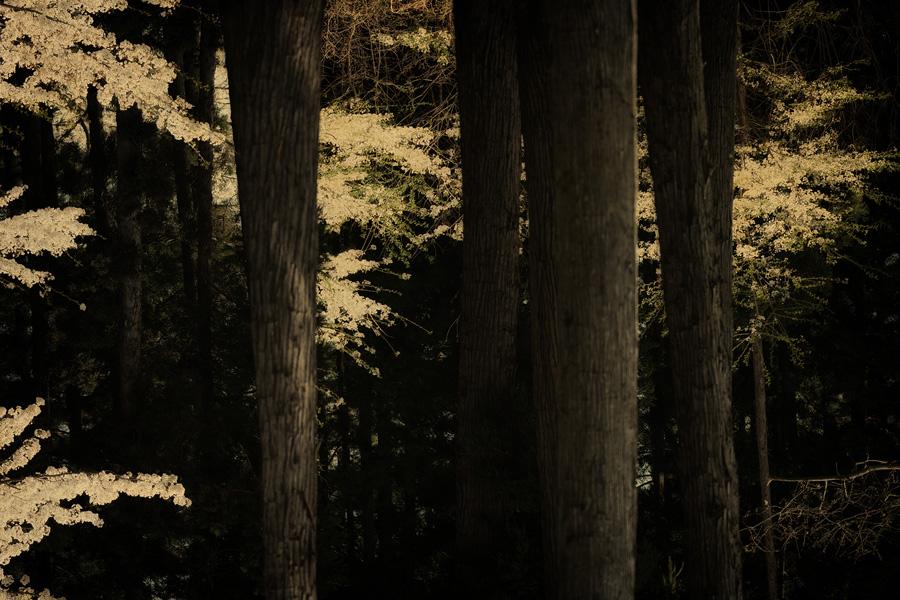MOK_#60764 albarran cabrera de foscheraro.jpg