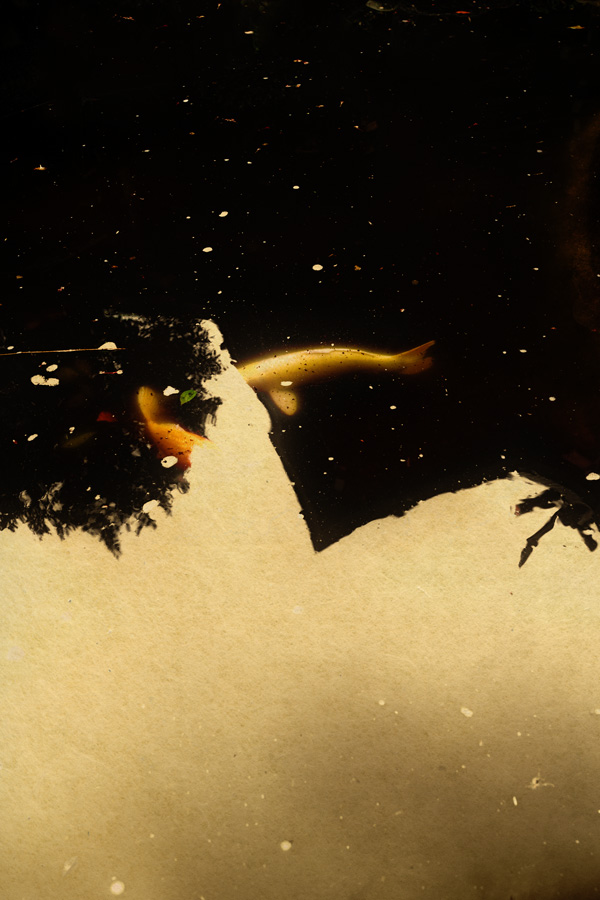 albarran cabrera de foscherari MOK #148.jpg