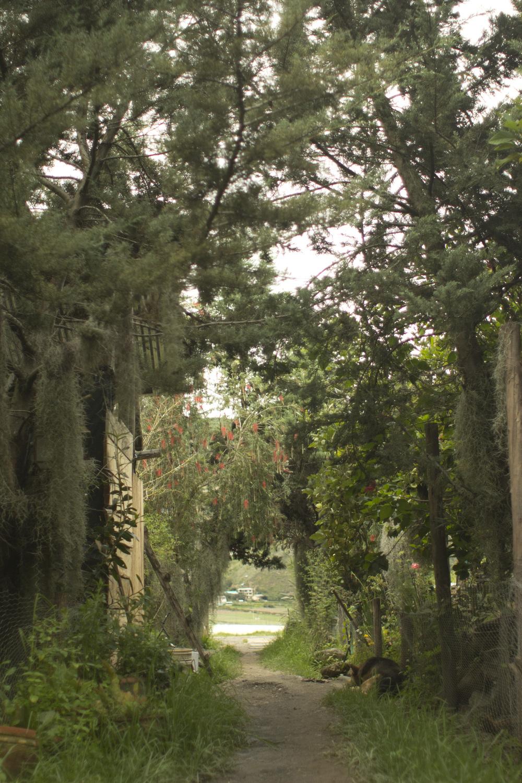 Walkway into Taller de las Macanas
