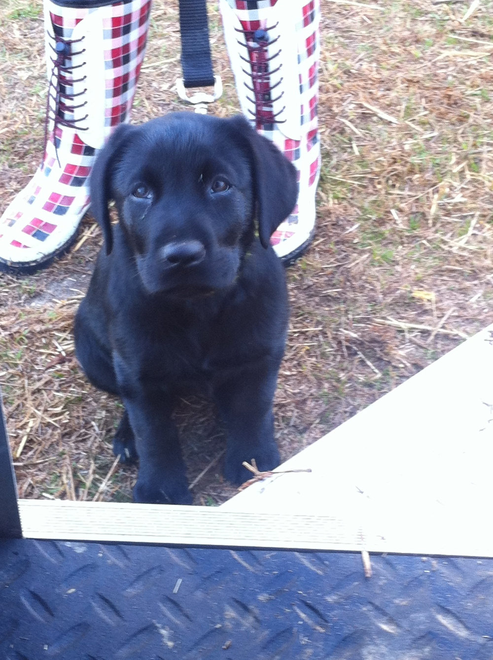 Kimber in Aiken, SC 10 weeks old.