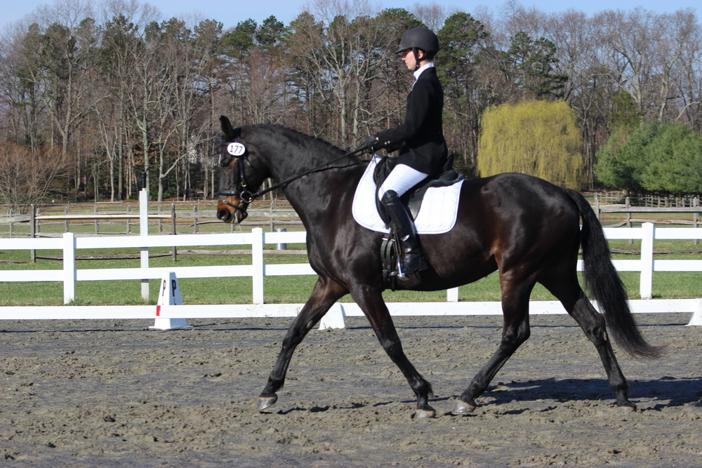 Plum Lucky and I, USDF rated 1st level, Spring 2015