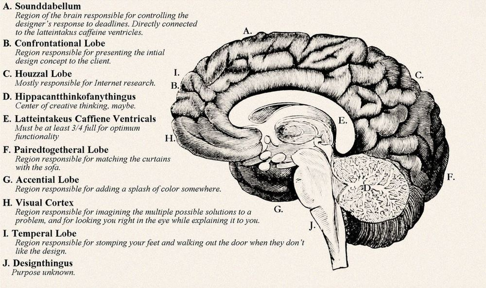 The brain of a designer.