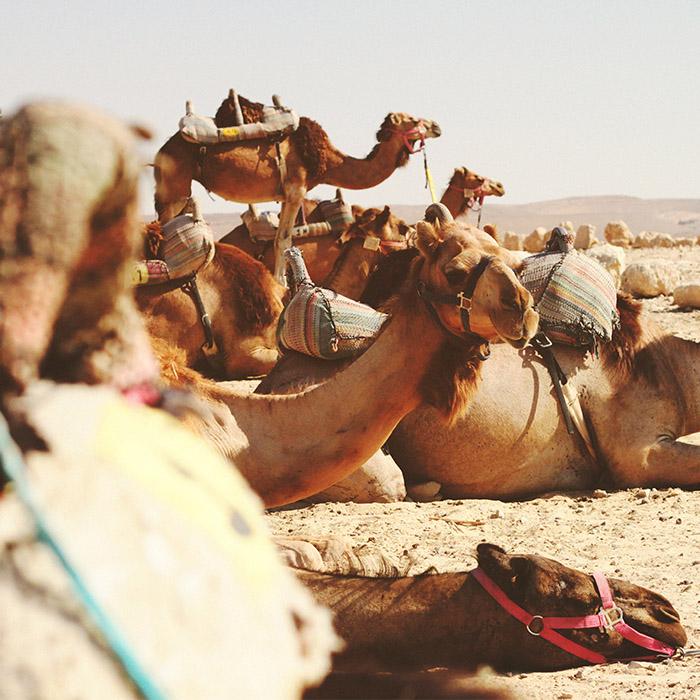 ArabGulf.jpg