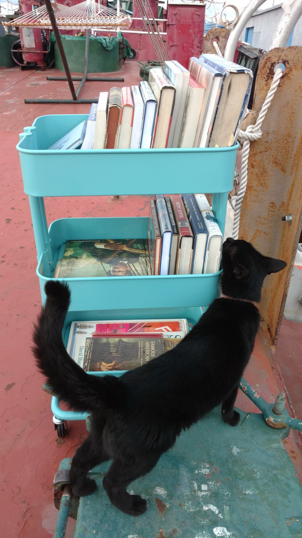 Ship cat Chiclet, invites you to browse PortSide's Maritime library, but She insists that all dogs be on leashes.