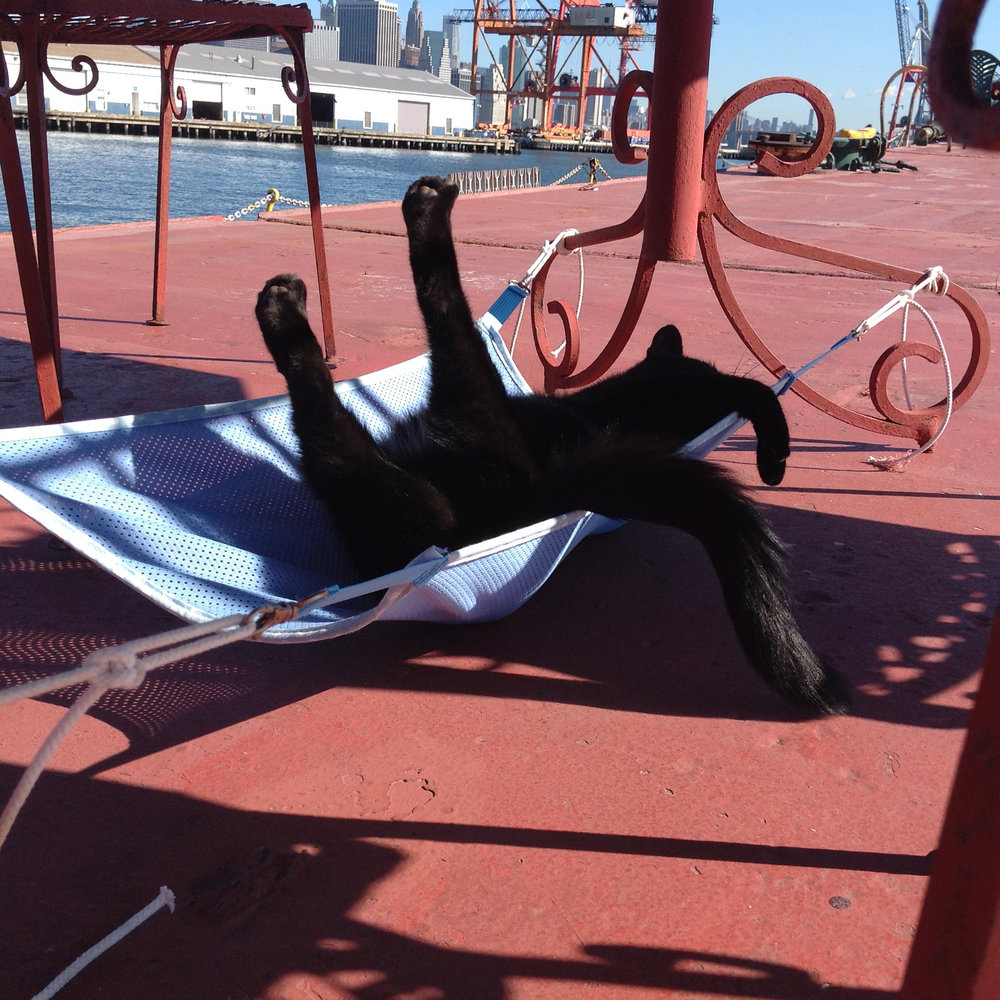 150913 Chiclet relishing new hammock.JPG
