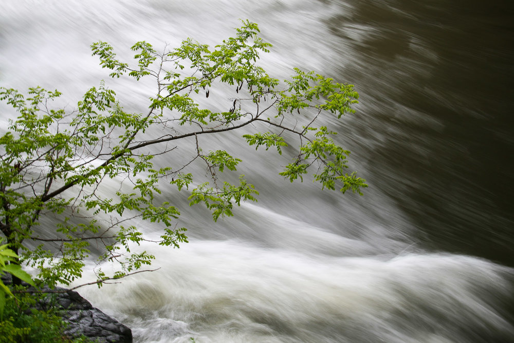 river-tree-rushing-stream
