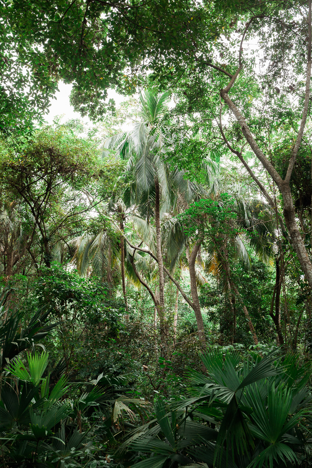 jungle-plants-Tayrona-National-Park