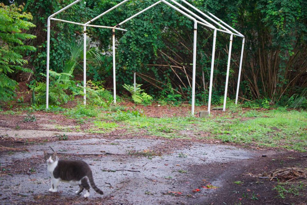 cat driveway.jpg