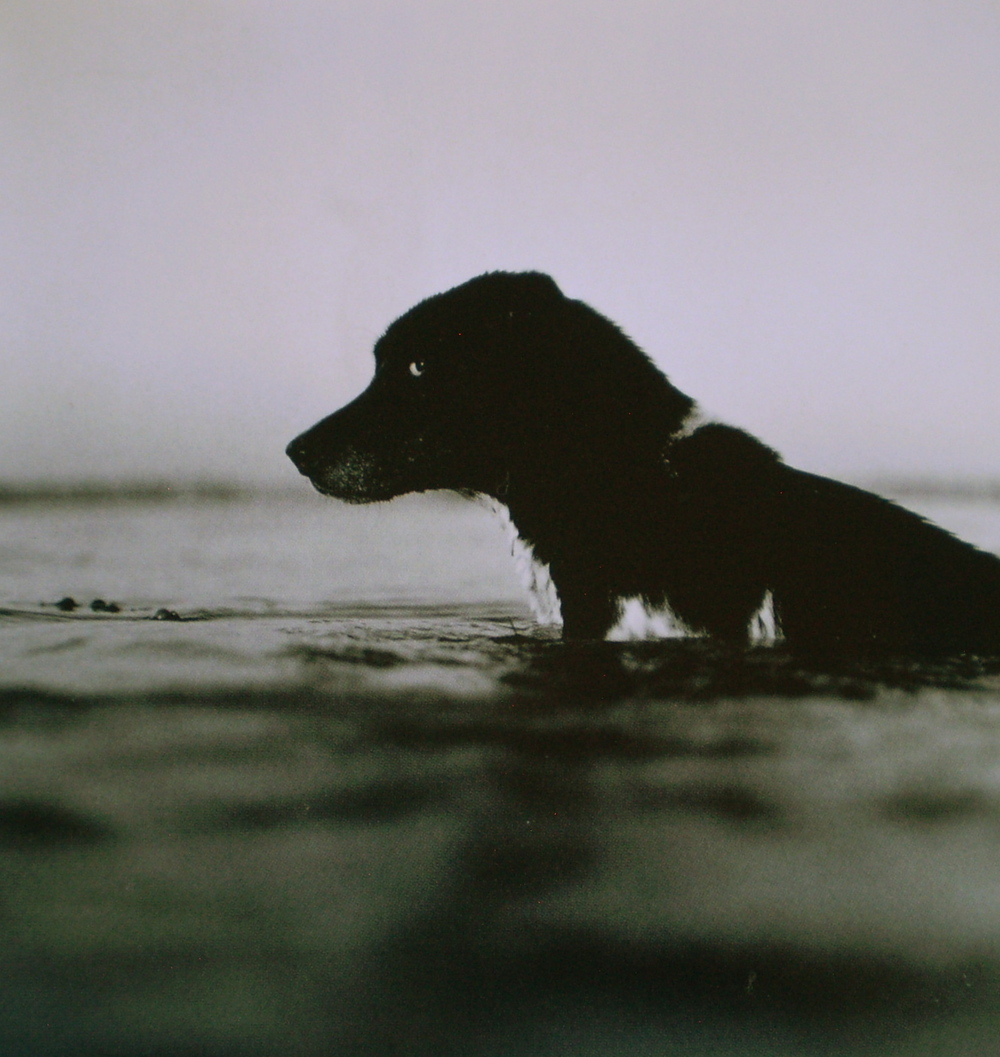 Fui, dog beach.  Photo by Keith Carter.
