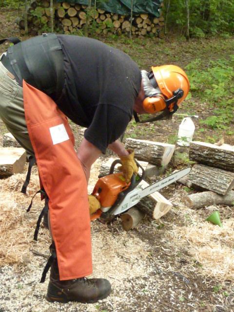 Harvesting maple logs