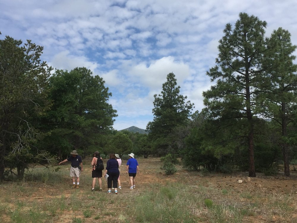Sixty-plus acres of pine forest adjacent to the National Forest --are always available for hiking, nature walks, biking and exploration. Please bring your own helmet if biking.