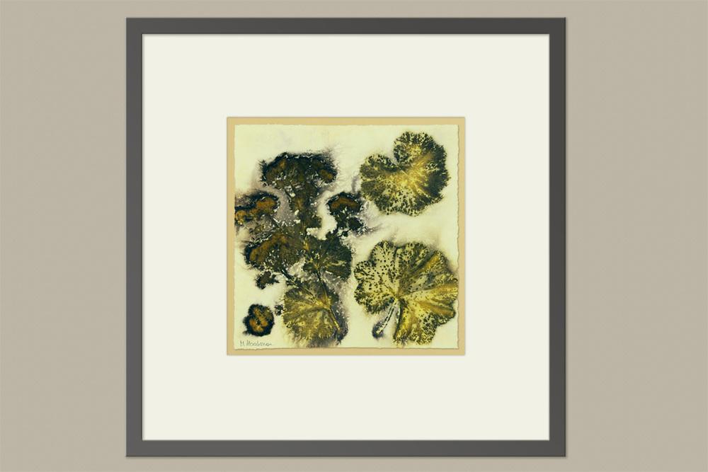 Oude Botanische Prenten : ≥ set botanische ingelijste prenten curiosa en brocante