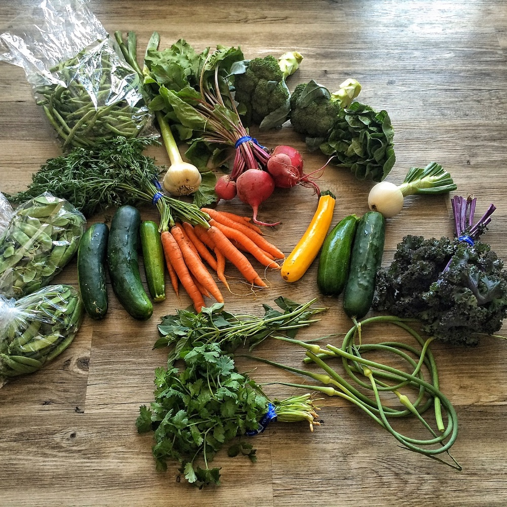 Snow peas, snap peas, cucumbers, zucchini, carrots, beets, onion, garlic, garlic scapes, broccoli, kale, cilantro, lemon basil
