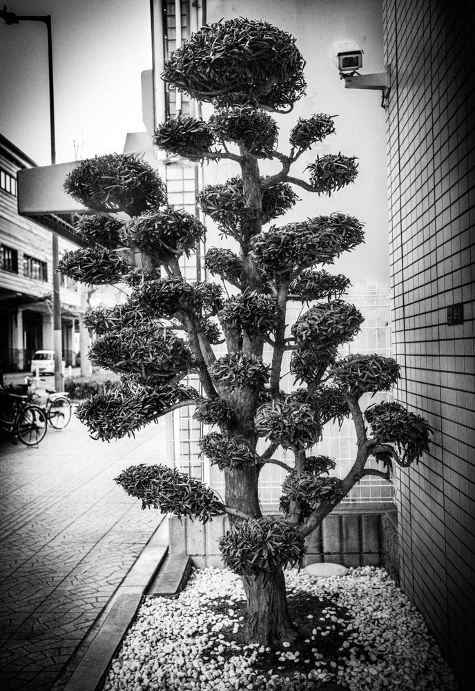 HEWITT_MEG_tokyo-is-yours-61.jpg