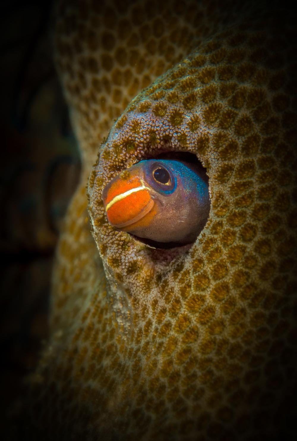 Bali_Komodo_2015-12.jpg