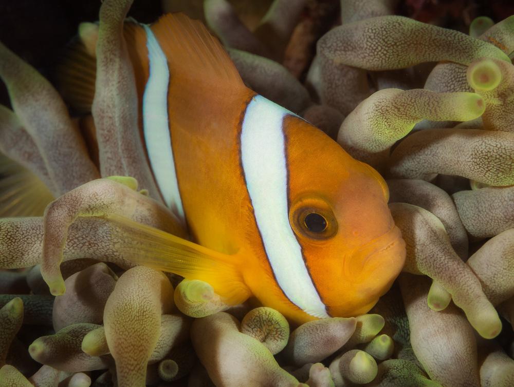 Bali_Komodo_2015-38.jpg