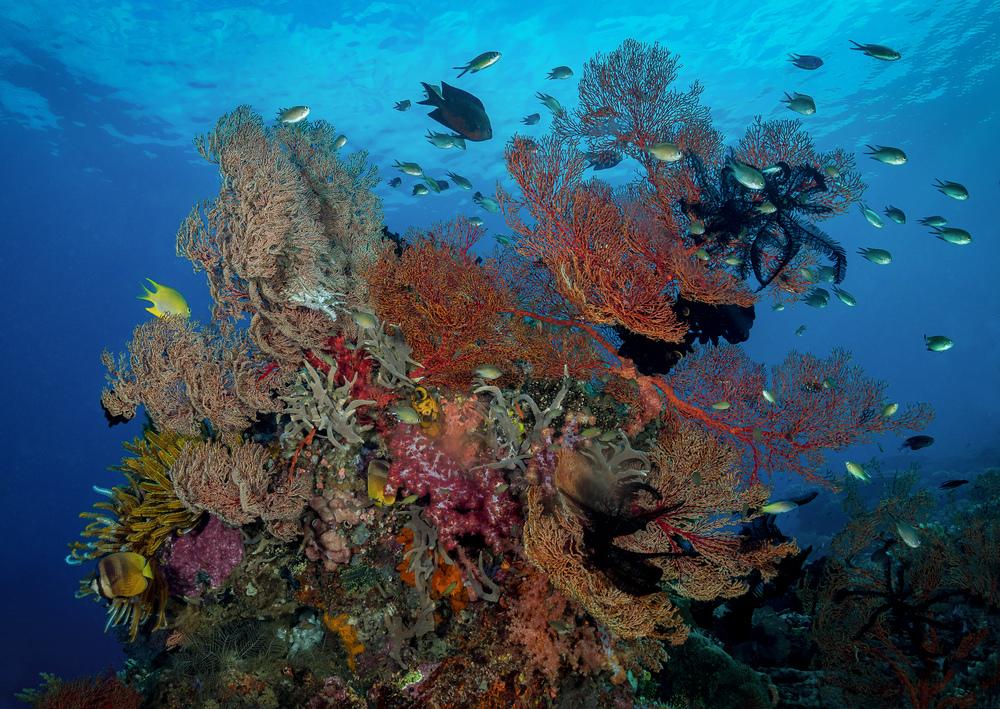 Bali_Komodo_2015_reef1-.jpg
