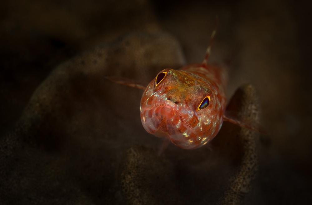 Bali_Komodo_2015_lizardfish_2500.jpg