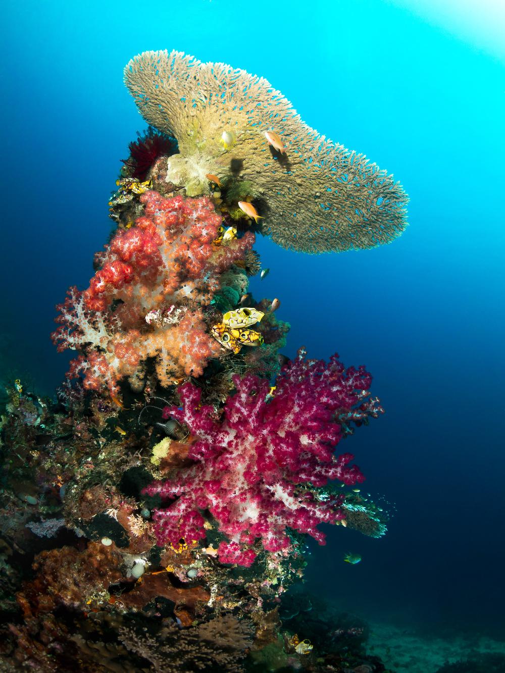 coral tower_2000.jpg