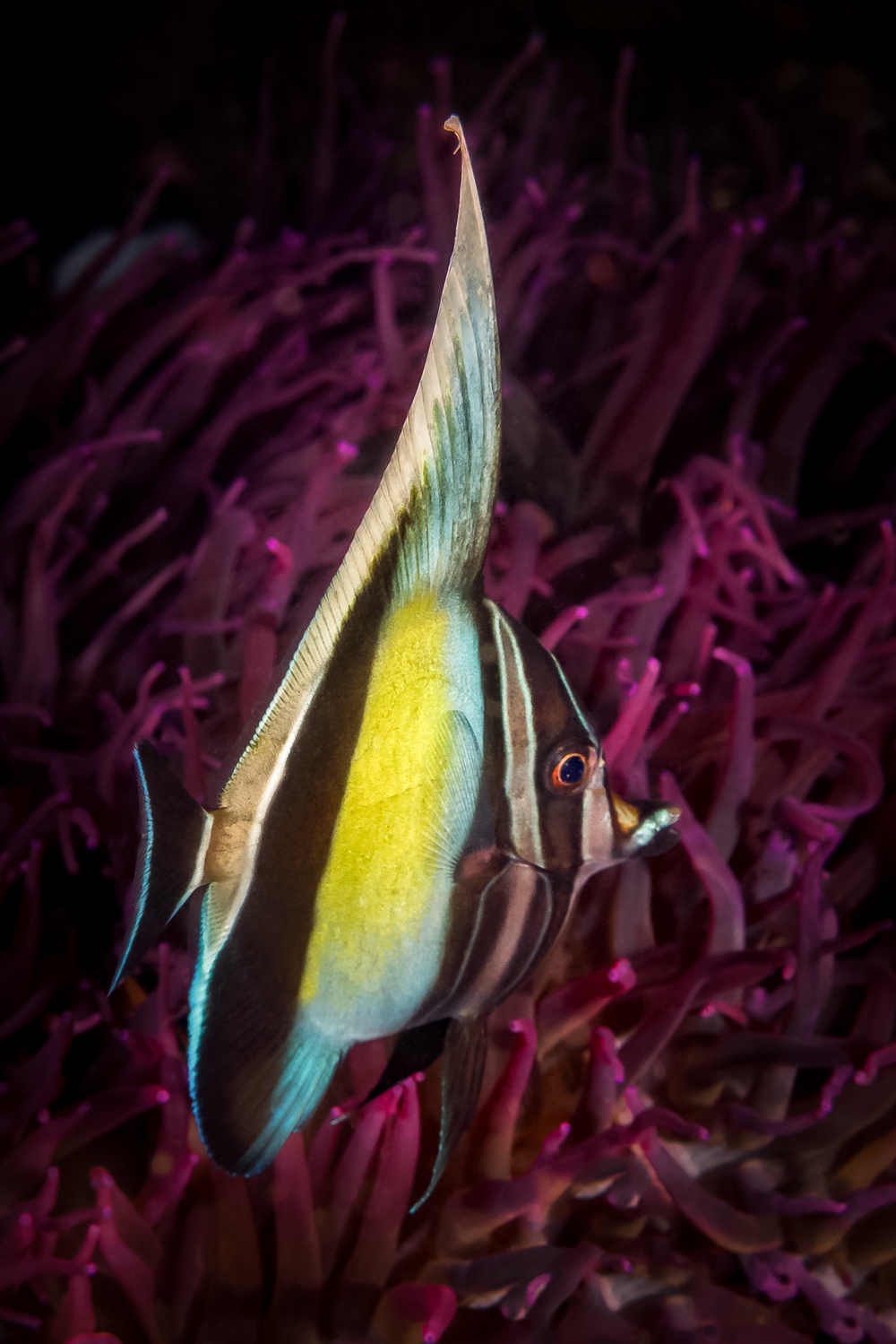 purple&yellow_2000.jpg