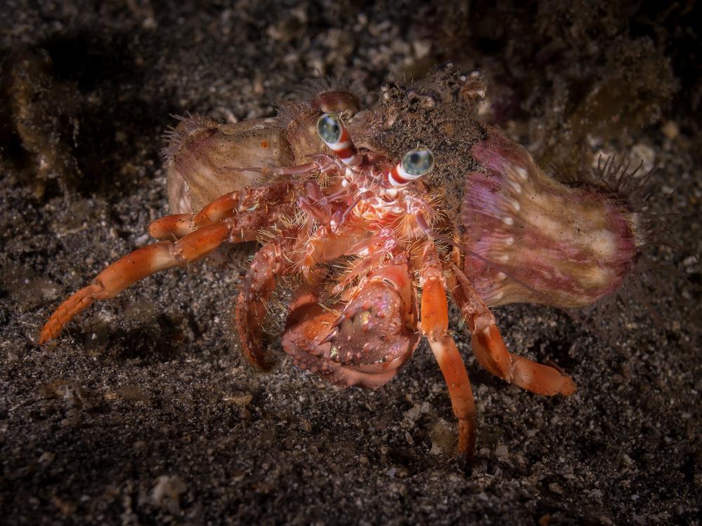 decorated crab_2000.jpg
