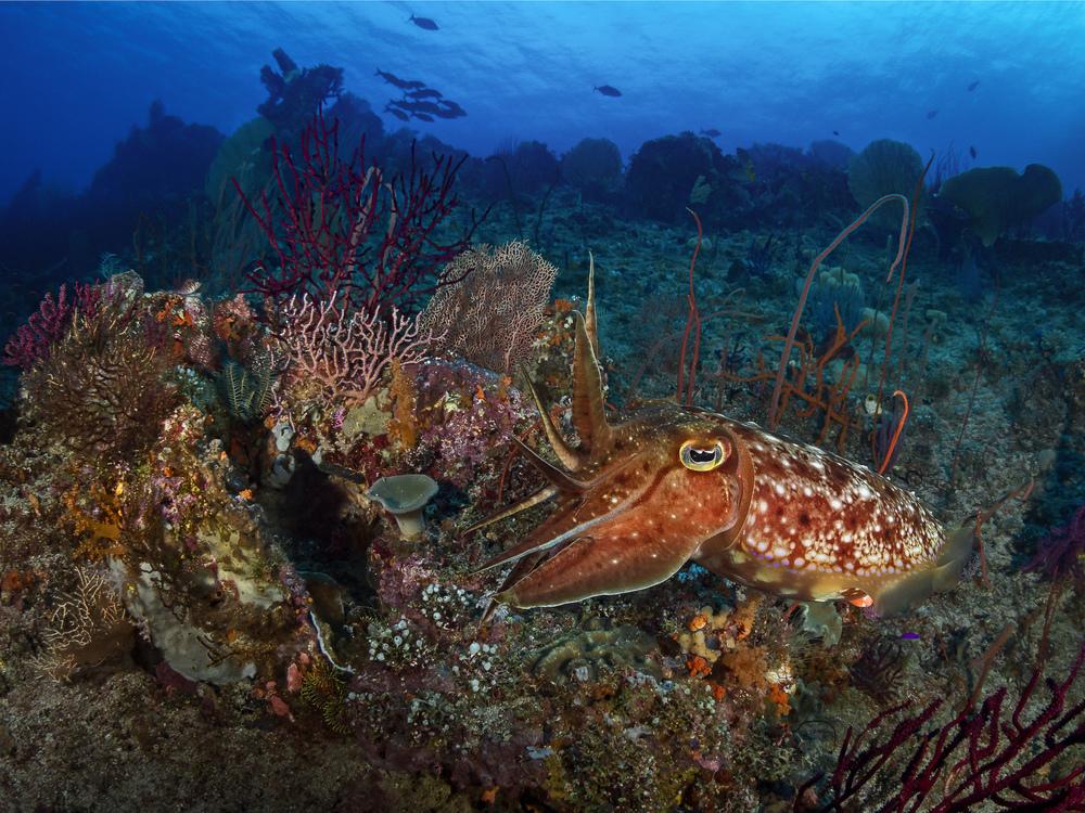 reefscene_2000.jpg
