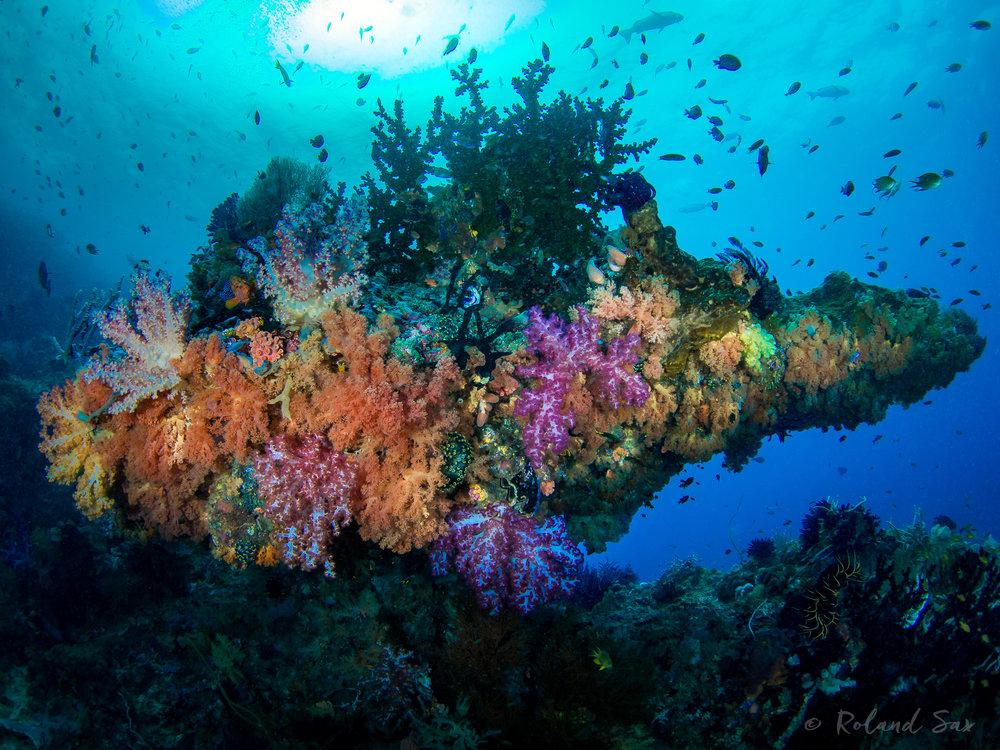 reefscene1-.jpg
