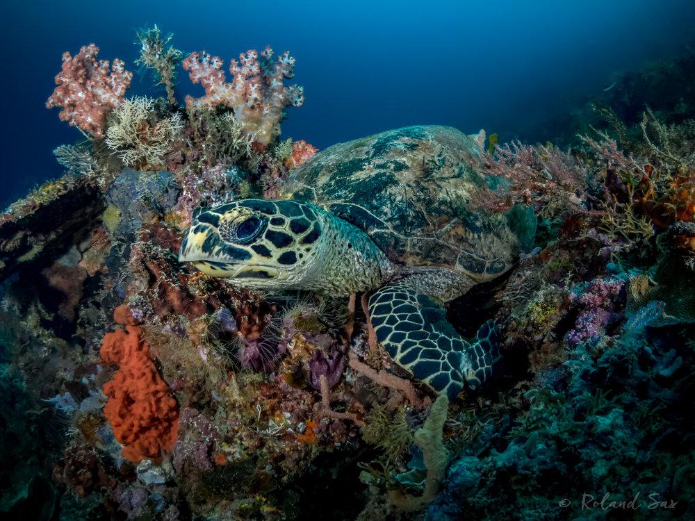 turtle1_2000-.jpg