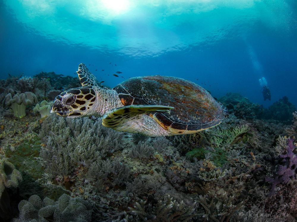 turtle2_2000-.jpg