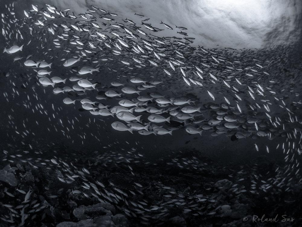 fishsoupbw_2000-.jpg