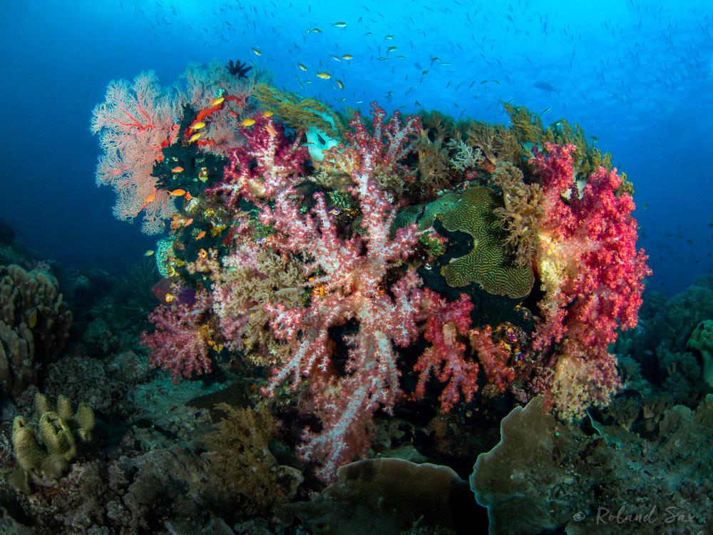 reefscape1_2000-.jpg