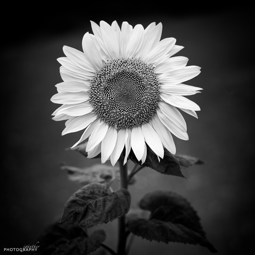 Leica M - Summilux 1:1.4/50 ASPH. ISO 400 ~ 50mm ~ f/1.7 ~ 1/125 sec.