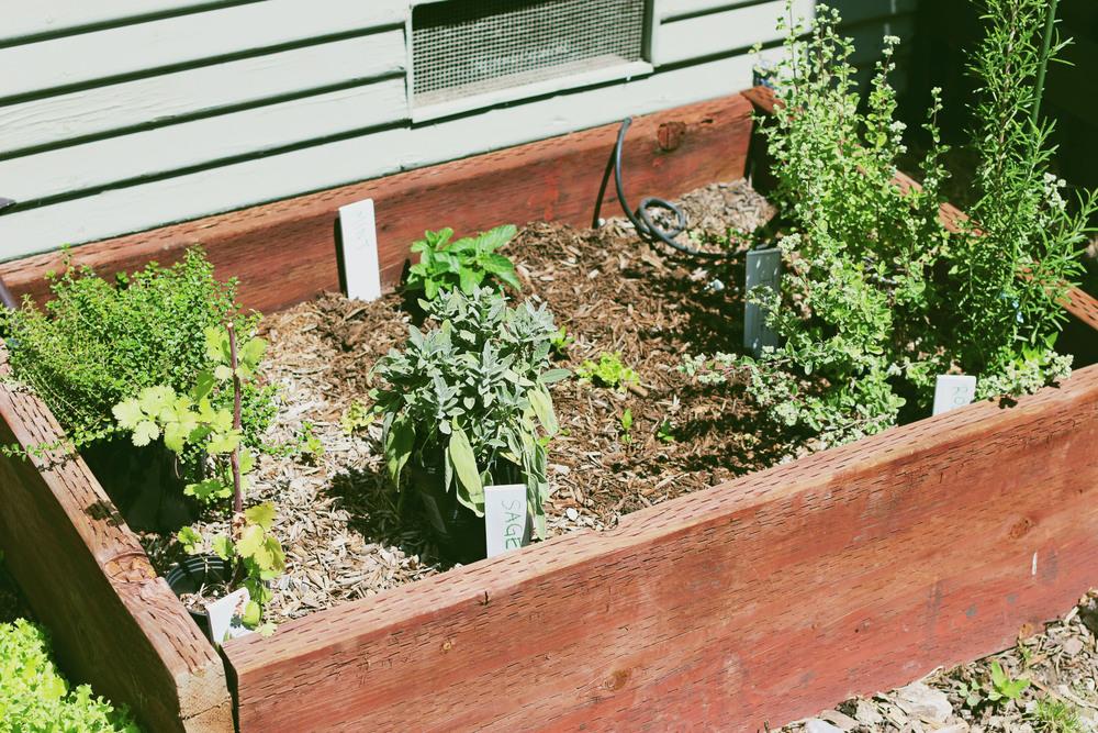 GardeningUpdate1.jpg