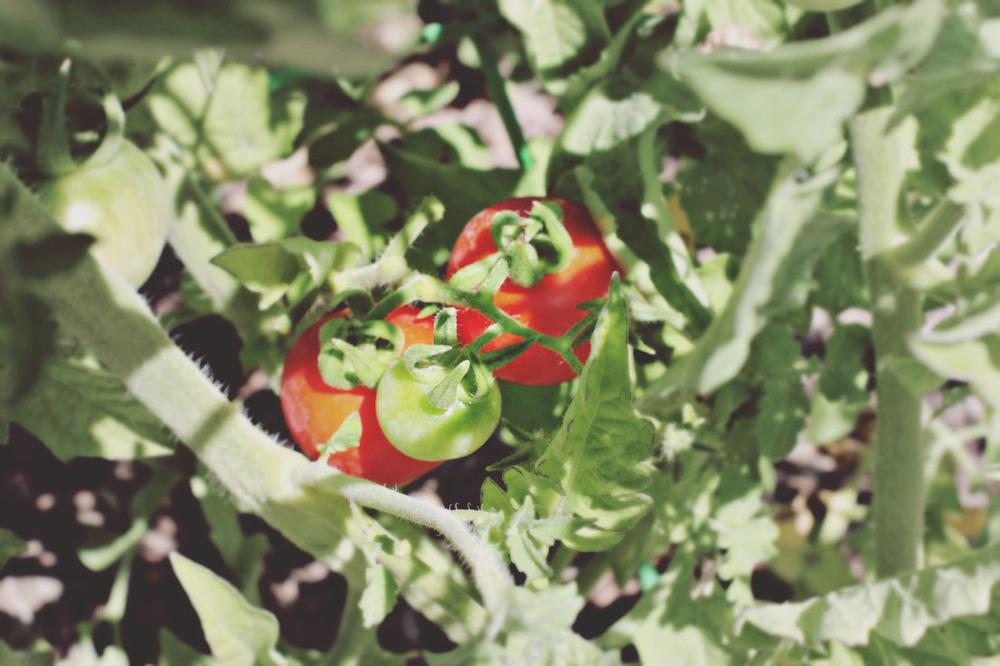 Grow part 2_2 copy.jpg
