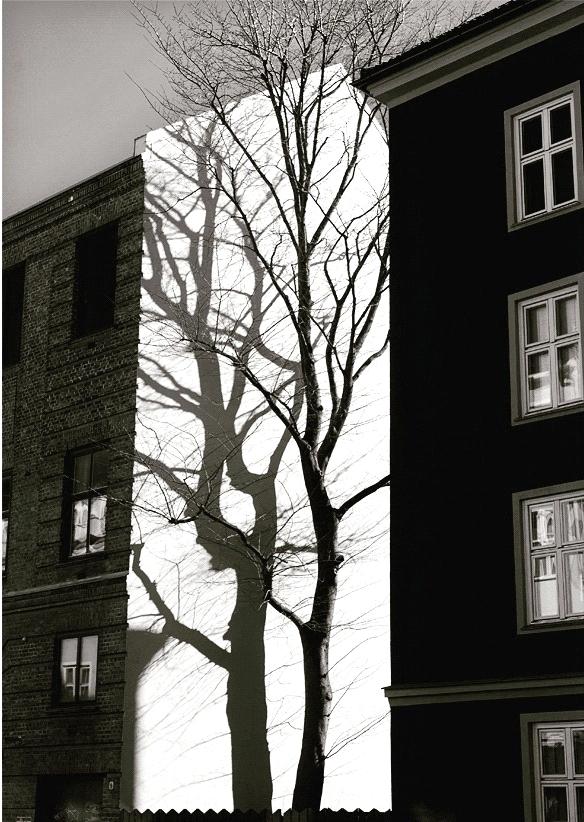 - Han kommer ikke inn til henne, han er på vei ned trappen, hun løper bort til vinduet, får øye på ham, ute, han sitter på en benk med ryggen til henne, han røyker, etter hvert greier hun ikke å telle hvor mange. Hun må ut, tar ikke på noen jakke, heller ingen sko, hun stanser ved det store treet, et stykke bortenfor benken. Gresset i bakgården er fuktig av morgendugg: Hele natten har forsvunnet, ingen skyer på himmelen, solen er rød i øst. Hun tenker at treet hans må felles, det skygger for utsikten.Foto: Nina Staff. Tekst: Mari Kjetun