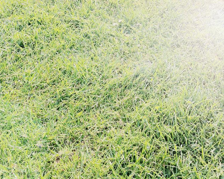 lan10 - grass.jpg