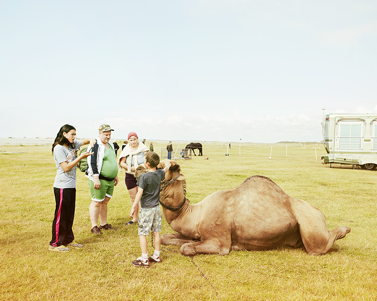 Blog - The Camel.jpg