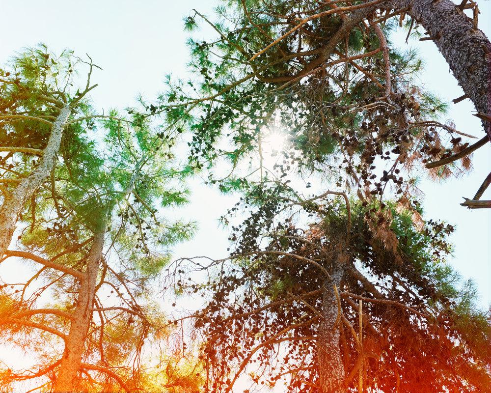 Pine-Cones-no.-5.jpg
