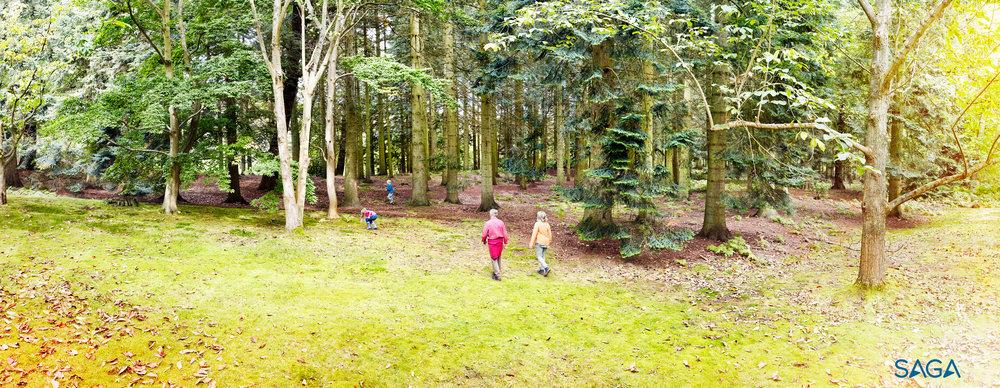 Saga - Forest - landscape.jpg