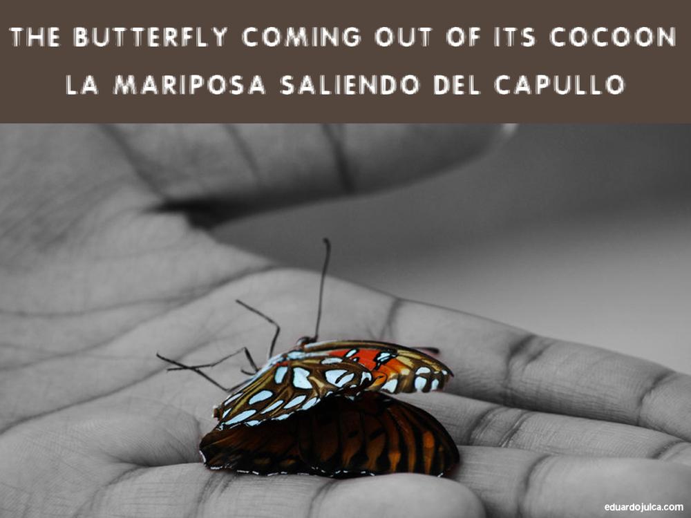 LA MARIPOSA SALIENDO DEL CAPULLO.jpg