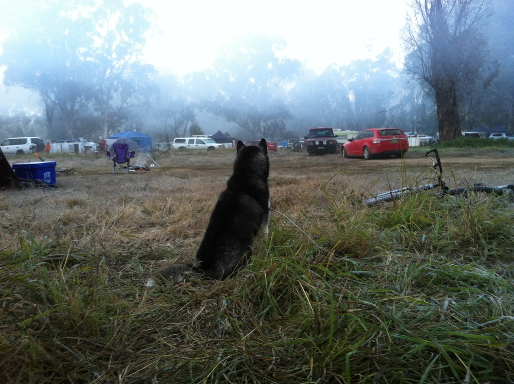 "Mischa surveys the camp. ""I want to go play!"""
