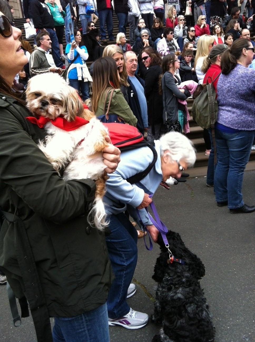 Oscar's law dogs 1.jpg