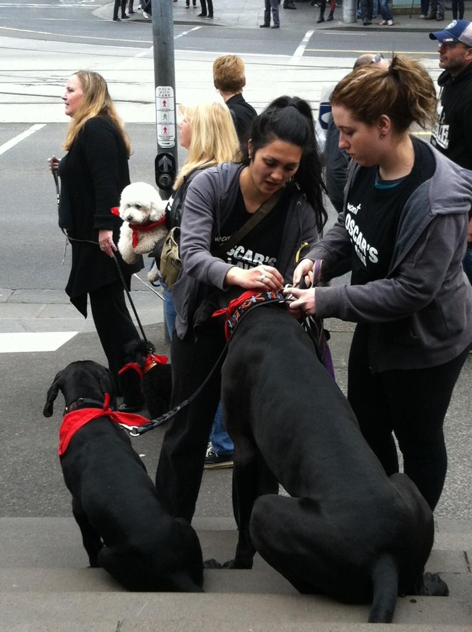 Oscar's law dogs 2.jpg