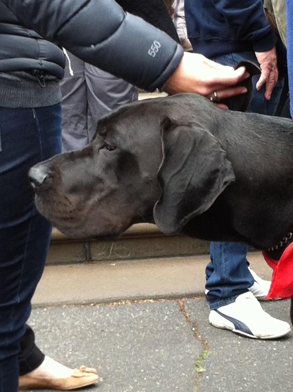Oscar's law dogs 3.jpg