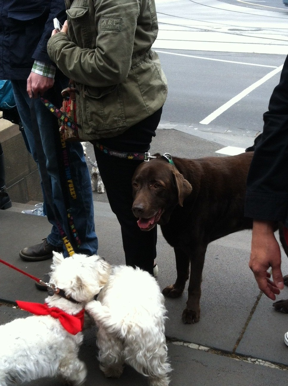 Oscar's law dogs 6.jpg