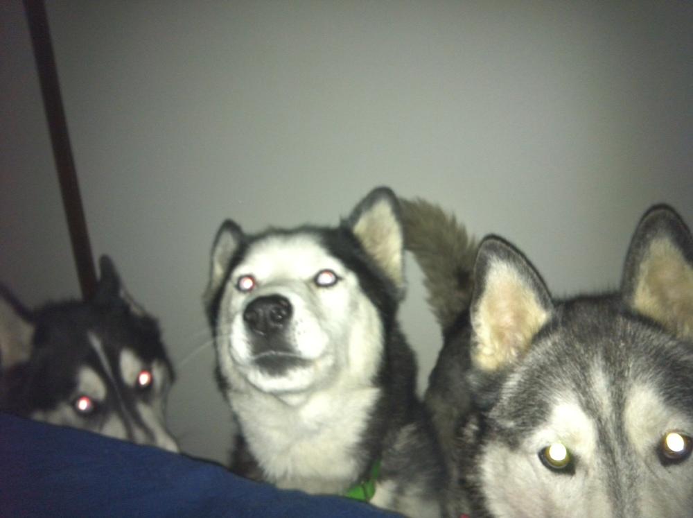 Bolo: I think she's waking up.