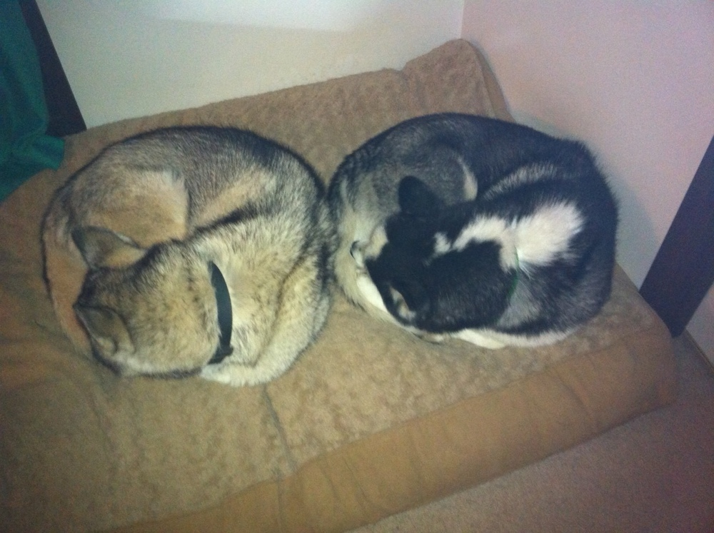 bed 2 dogs 2.jpg