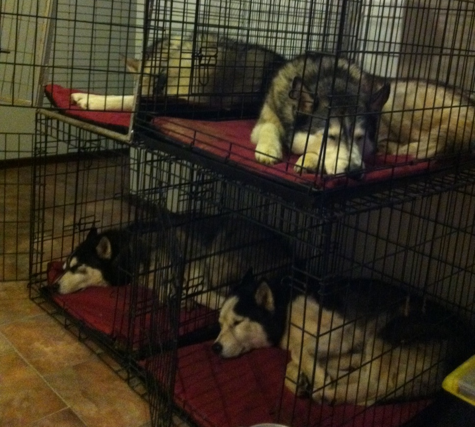 Yeah, we know the doors are open, but we can't be bothered getting up...