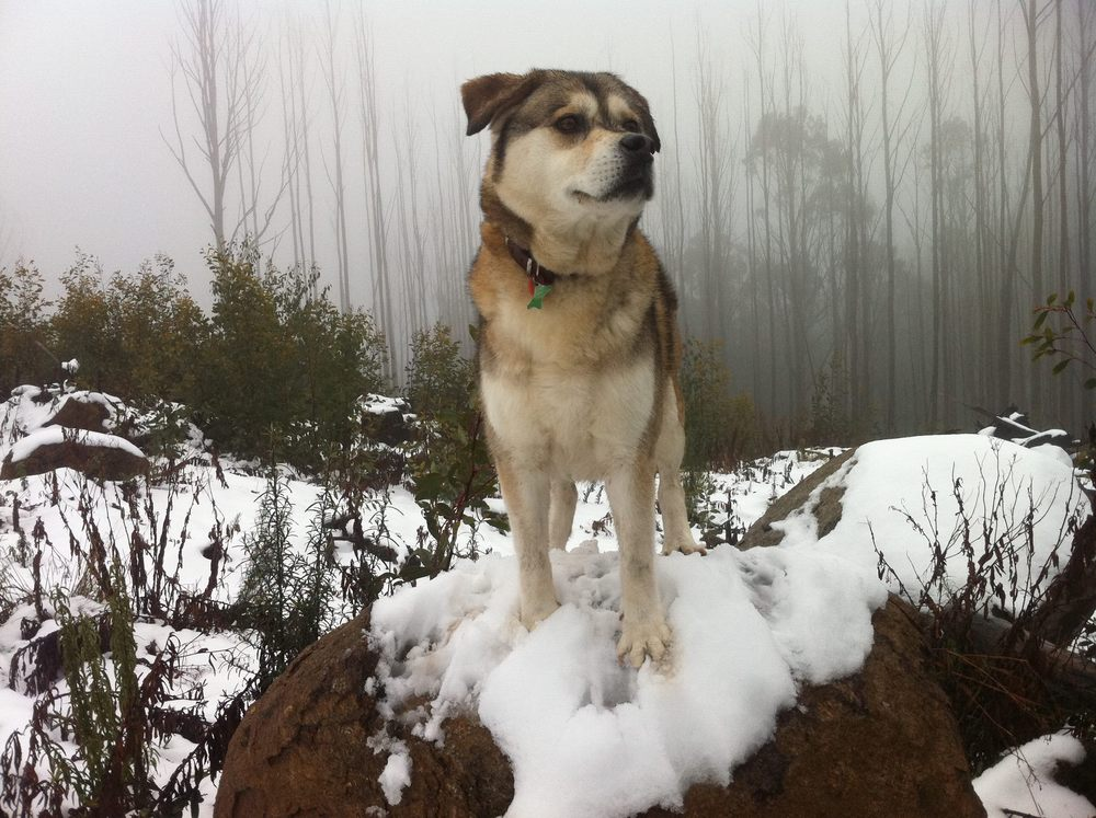 Tess at Mt Margaret 2012.