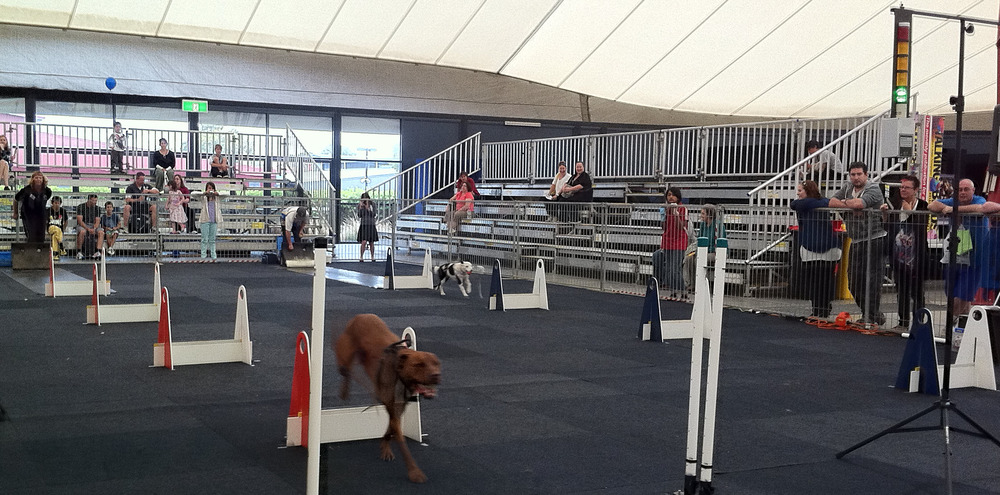 Pex expo flyball best wide angle.jpg